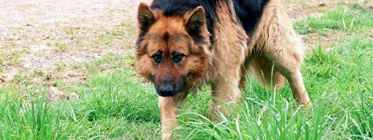 Privé de nourriture et battu, un berger allemand dévore sa maîtresse https://t.co/AGJGQQ0su6