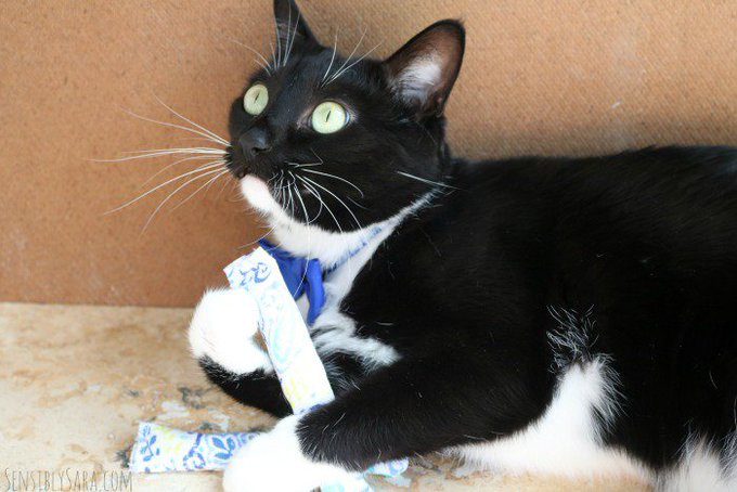 How to Make Irresistible DIY Cat Toys [AD] #CatsLoveNutrish