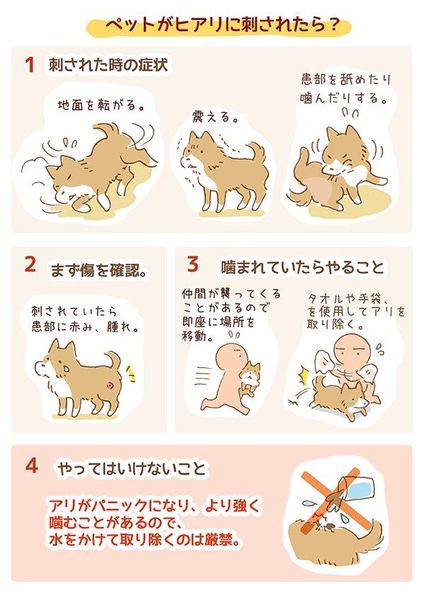 はてなブログに投稿しました。#ラブファイブ #わんこ #保護犬 #漫画   【犬イラスト】ペットがヒアリに刺された場合の対処法-こぐま犬と散歩〜元保護犬の日記〜 suzumetengu.hatenablog.com/entry/hiari