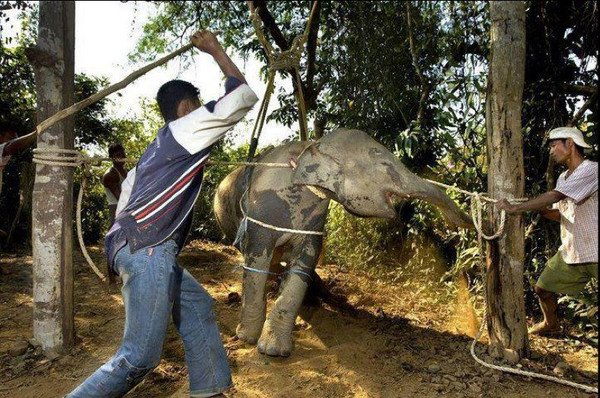 550,000 wild animals currently suffer at hands of wildlife tourism.#Tourists get educated before you go #OpFunKill<br>http://pic.twitter.com/xomnBrZgod