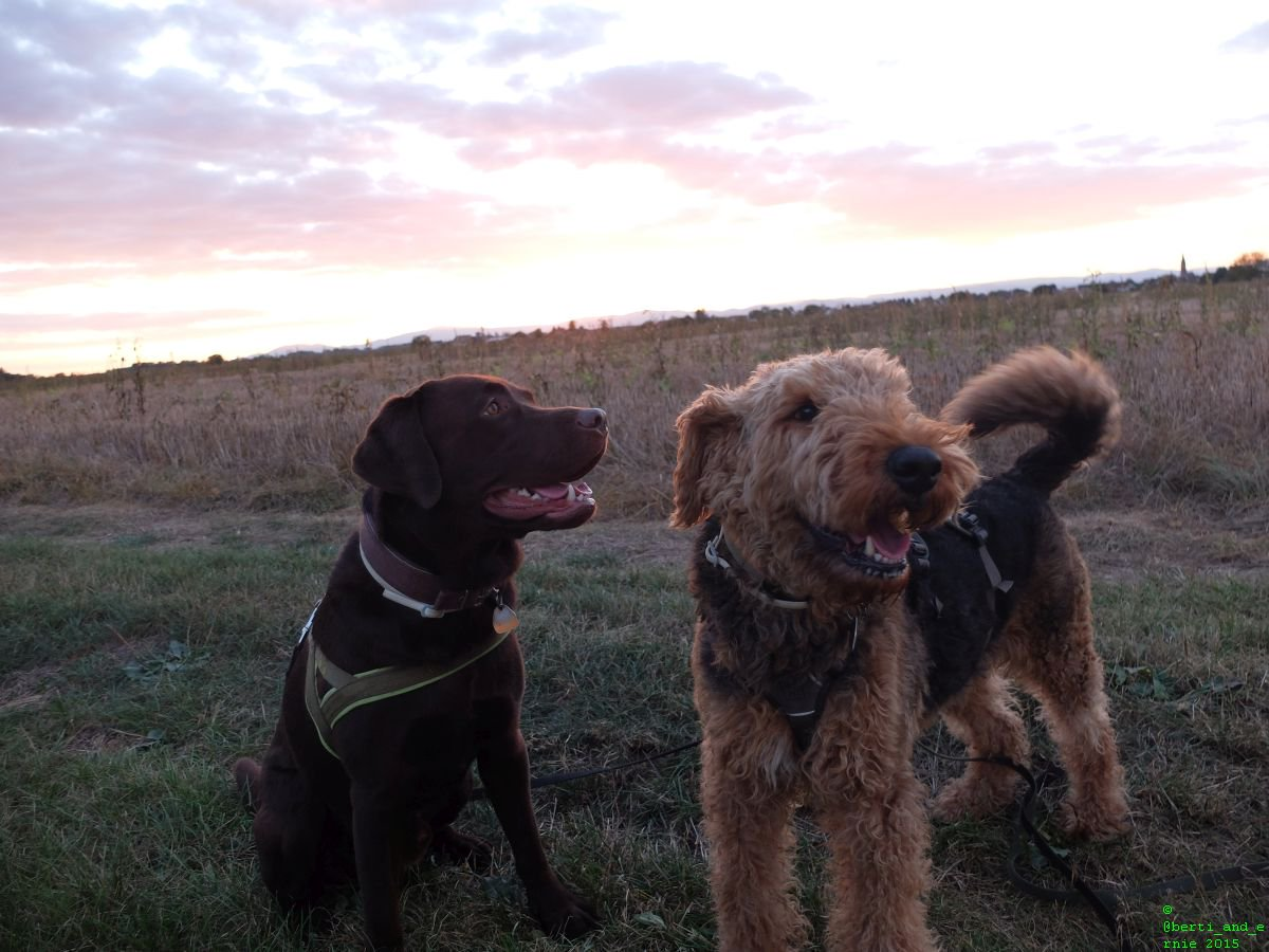 Two #happy #dogs to cheer you up! <br>http://pic.twitter.com/CWCP6SkDdp