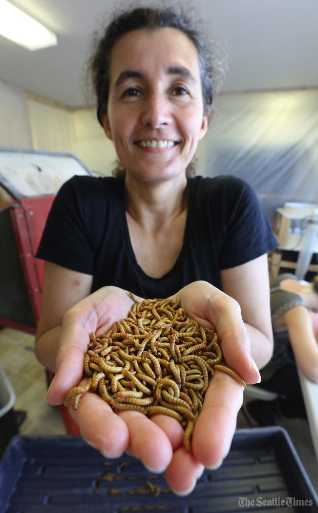 Wriggle room: Beta Hatch's insect farm grows millions of mealworms in SeaTac. https://t.co/ubO3gnOfcz