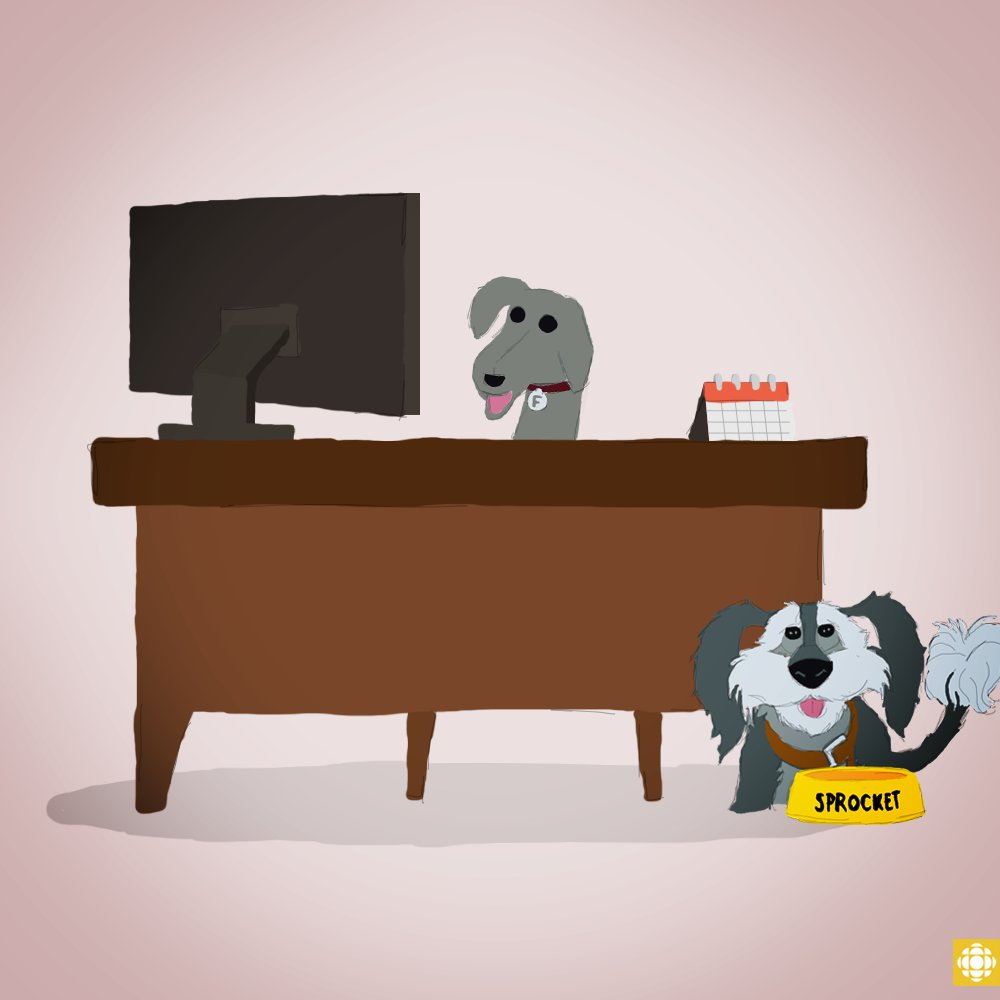 Today is #TakeYourDogToWorkDay! Which dog would you want to take to wo...
