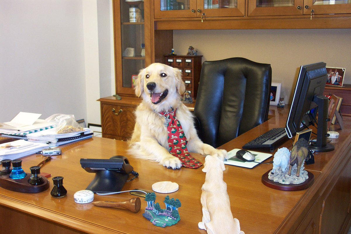 Brought my dog to work on #BringYourDogToWorkDay &amp; so did everyone else! #BuenViernes #FridayFeeling<br>http://pic.twitter.com/UxIikhBf3D