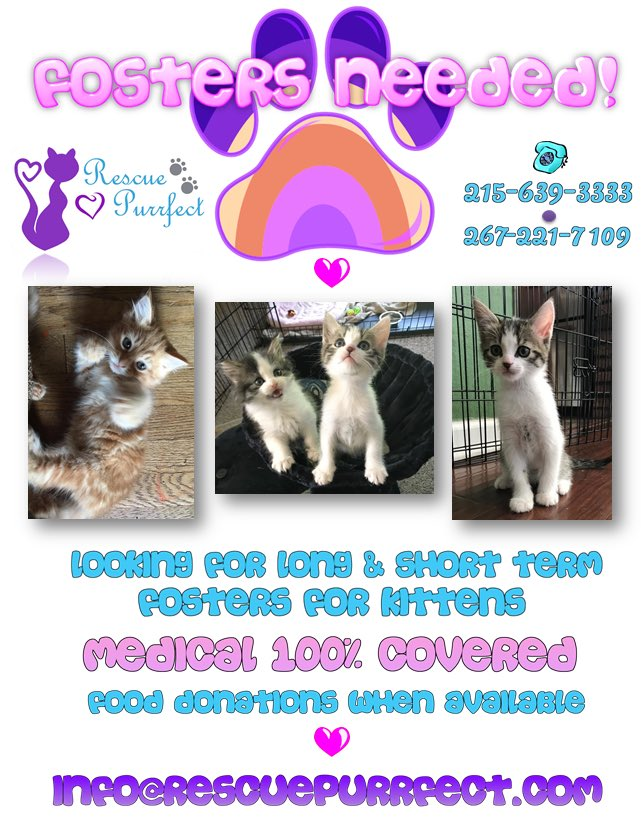 We need foster homes/families! Email or call now!! #fosteringsaveslive...