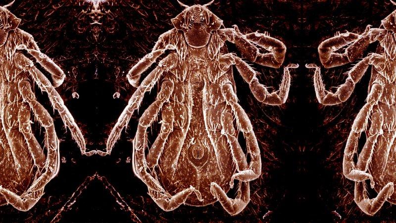 Lyme Disease: Inside America&#39;s mysterious epidemic - @winona_rose @RollingStone  http:// crwd.fr/2sFV2fC  &nbsp;   #climate #health<br>http://pic.twitter.com/2FIepgIqdx