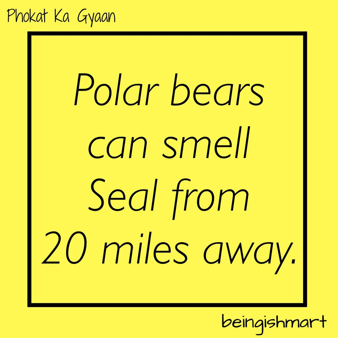 I Can Also Smell #RajmaChawal from 20 miles  #DidYouKnow #PolarBear #Seal #Phokat_ka_Gyaan #Fact #Facts #117 #knowledge #knowlegeispower<br>http://pic.twitter.com/A3gCsKhefs
