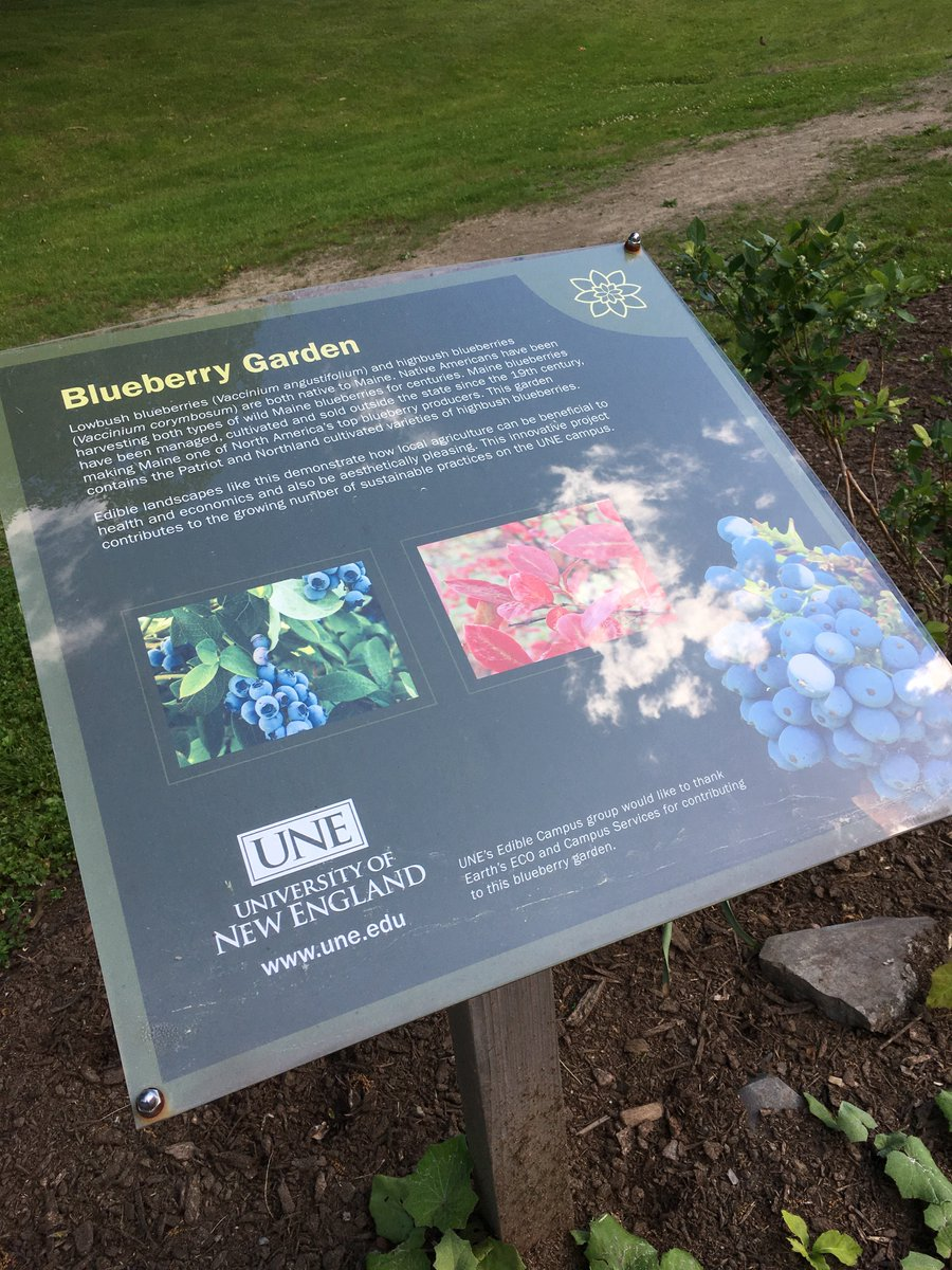 Have you seen our Blueberry Garden right here on campus? It's just outside the library. Stop by &amp; take a look! #UNE #lifeatUNE<br>http://pic.twitter.com/noDlcv5E1x