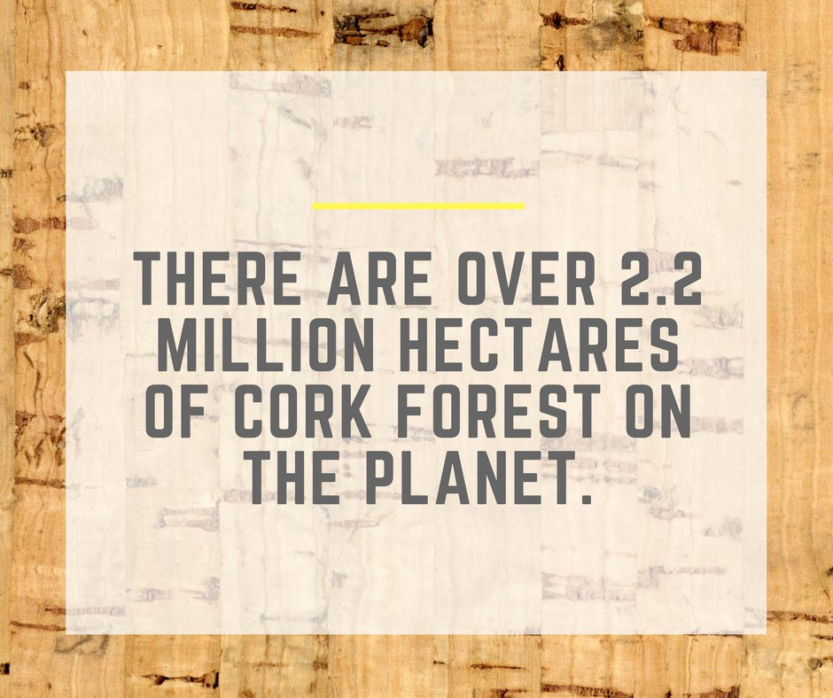 It&#39;s said that if we never grew another cork tree from now on, we would still have enough cork for the next 100 years! #TheCorkHouse #Cork<br>http://pic.twitter.com/4XgxdPPz4H