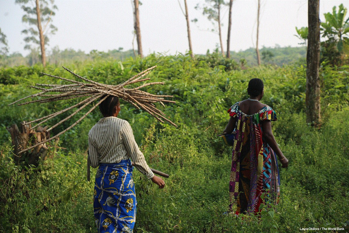 Communities work to address the impacts of #climatechange, improve livelihoods &amp; manage #forests sustainably in #DRC  http:// wrld.bg/1Wg830cOA91  &nbsp;  <br>http://pic.twitter.com/fRJsm7AyNx