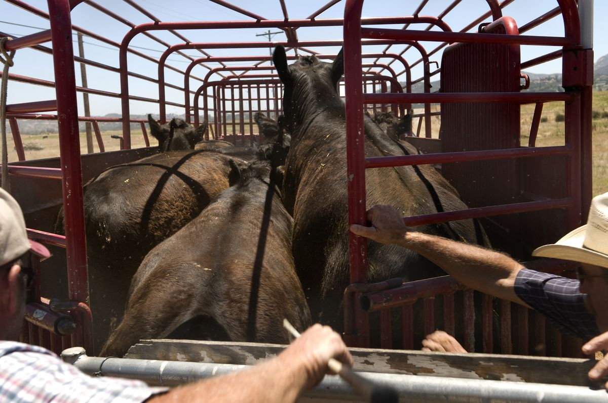 U.S. ranchers are selling off cattle because of the drought https://t.co/0J0WiUfu0W