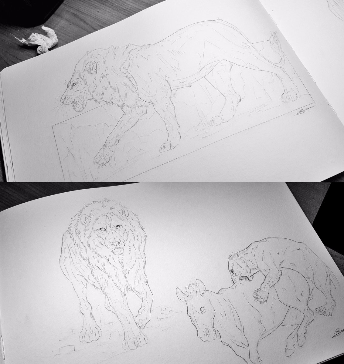 #lion #sketches.  Fancied studying some lions this morning.  Give me your biggest roar!<br>http://pic.twitter.com/WsO2LnQPh8