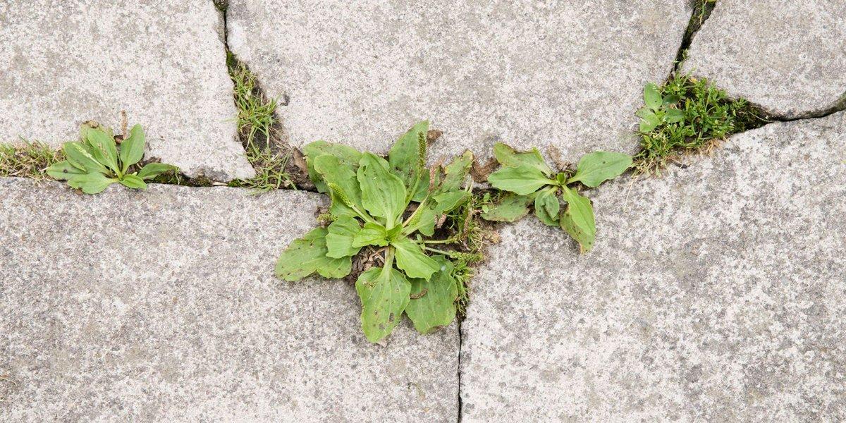 9 homemade weed killers https://t.co/Az9ePSxicu https://t.co/ddPUVaAqW...