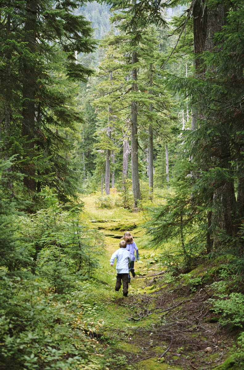 We love our many #forests in Canada, but did you know that forests actually help lower atmosphere #ozone formation?  http:// ow.ly/4MIZ30cPS3j  &nbsp;  <br>http://pic.twitter.com/o1t7Y6XnJG
