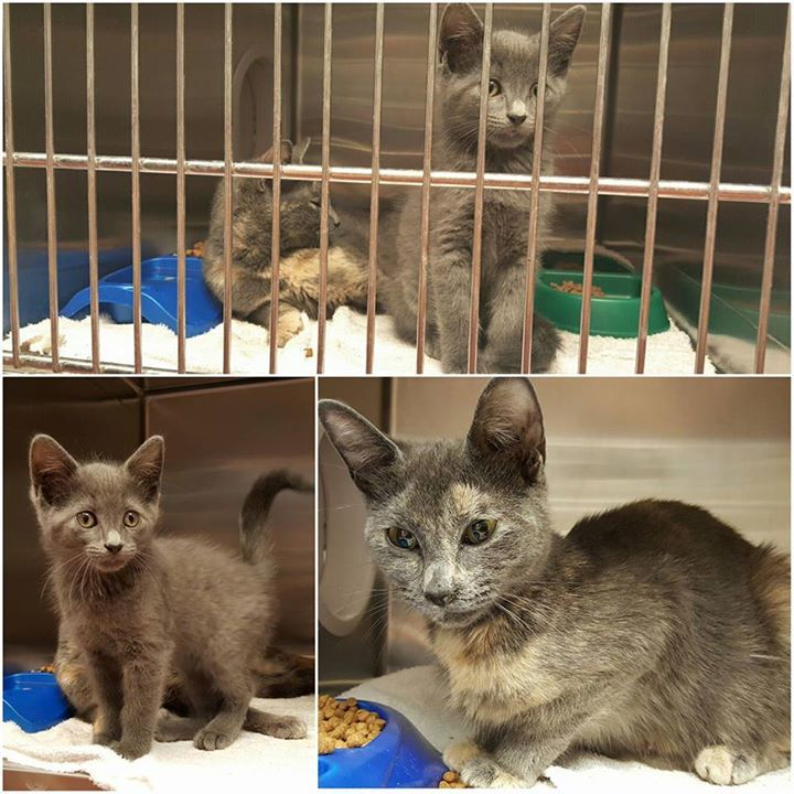 Sweet mommy and her cute baby need pledges and Rescue commitment. Cage...