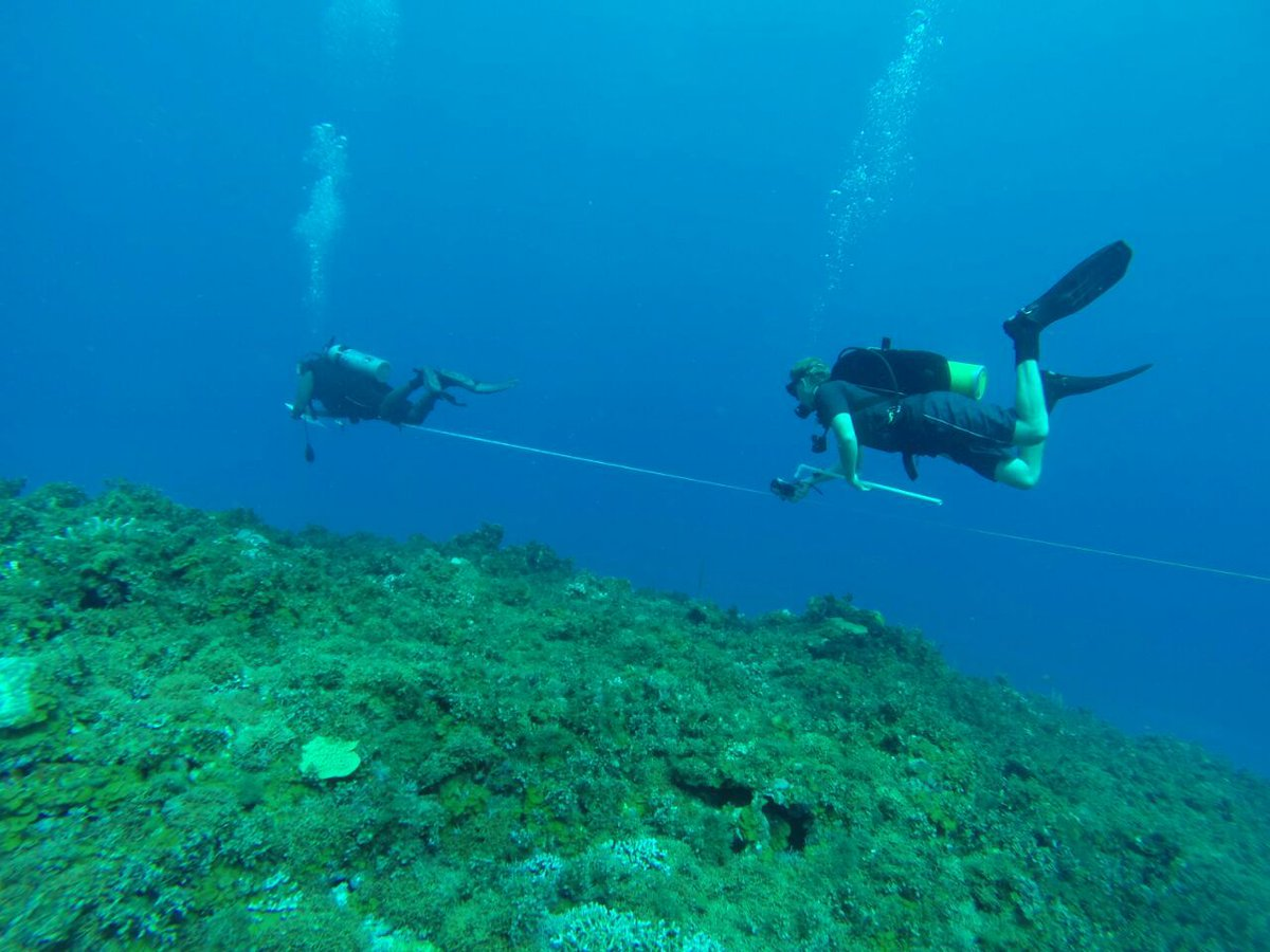 Bet you didn't know you could do THIS in the Peace Corps! Response Volunteer Dane conducts underwater surveys with a marine lab in #Jamaica