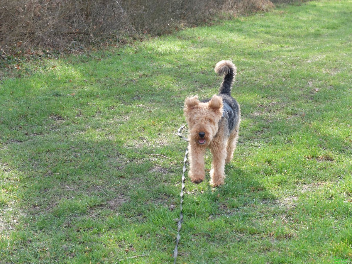 A #happy #dog is one of creations highlights. #dogsarejoy  You missed a scope? You can find them on  http:// ernie-and-berti.com  &nbsp;  <br>http://pic.twitter.com/622F0kuITI
