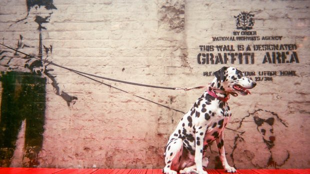 Has the #Banksy mystery finally been solved? https://t.co/A00k3ZynTl