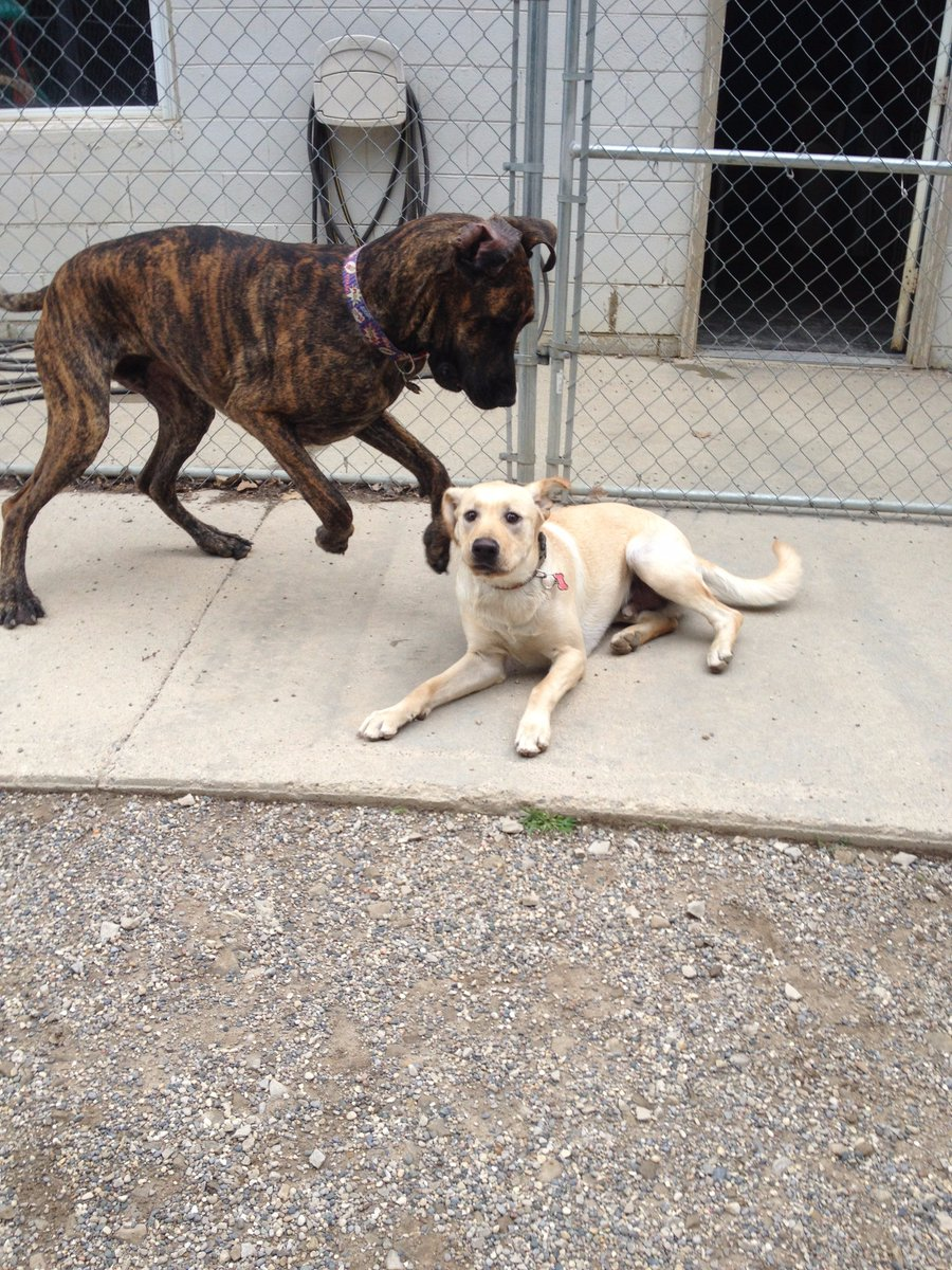 Diesel and Heimdall love to act silly