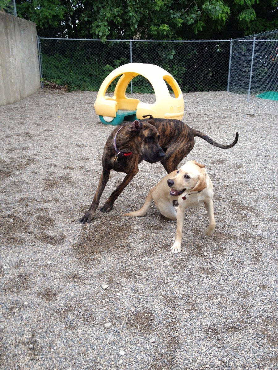 Diesel loves playing with his buddy Heimdall