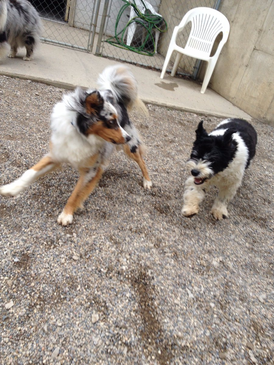 Fergus gets Bella to chase him