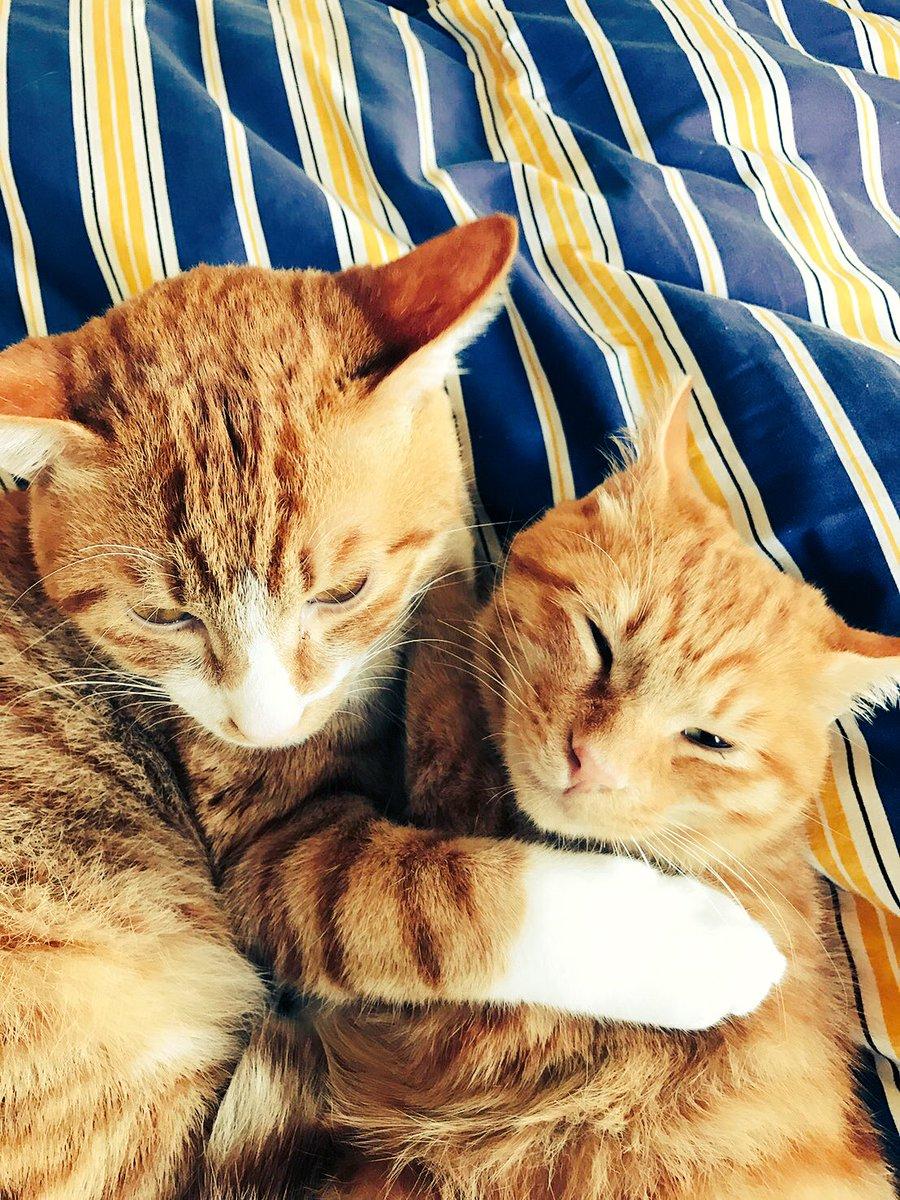 ちなみに石井君も猫を二匹飼っております。「きなこ」と「こたろう」です。よろしくお願いいたします。 (来たれ猫クラスタ!)