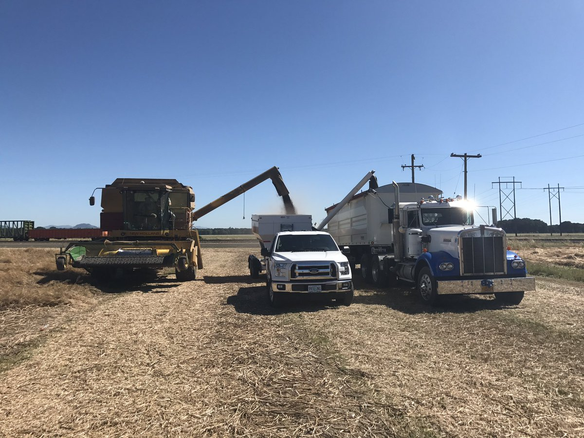 First yield monitor calibration of the season today in #TurnipSeed. Hoping the next one goes quicker #OrAg #NewHolland #Ford #PratumCoop <br>http://pic.twitter.com/xC6iaUtgPk