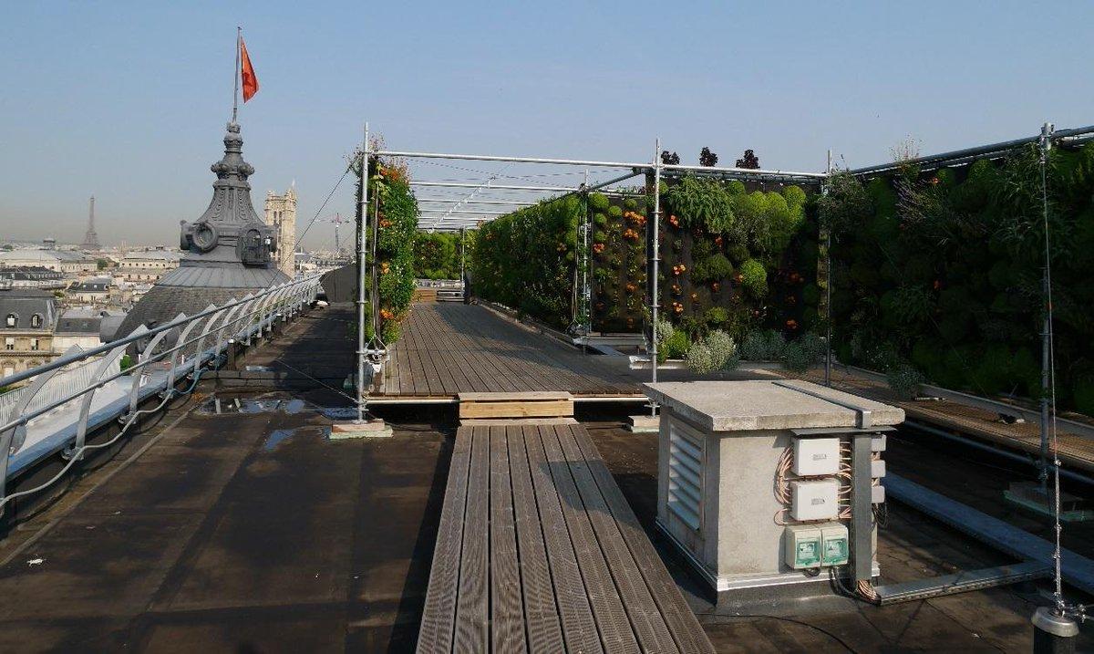Fraises, choux, herbes aromatiques: cette start-up cultive sur les toits des villes https://t.co/hTrsLK2bOF