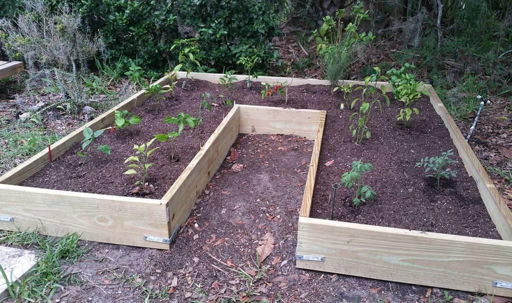 Raised Hot Chili Pepper Garden in my back yard. #carolinareaper #scorpionpepper #datilpepper #habaneropepper #gard…  http:// ift.tt/2s2cCxq  &nbsp;  <br>http://pic.twitter.com/iIQis9X5jM