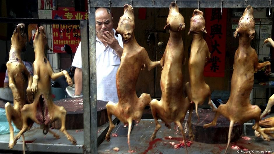 Despite protests, an annual #dog #meat festival gets underway in southern #China   http:// p.dw.com/p/1Fm0e  &nbsp;   <br>http://pic.twitter.com/U7efoEu524 #Climat…