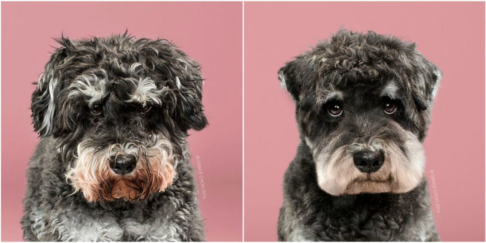You need to see these dogs before and after their haircuts https://t.c...
