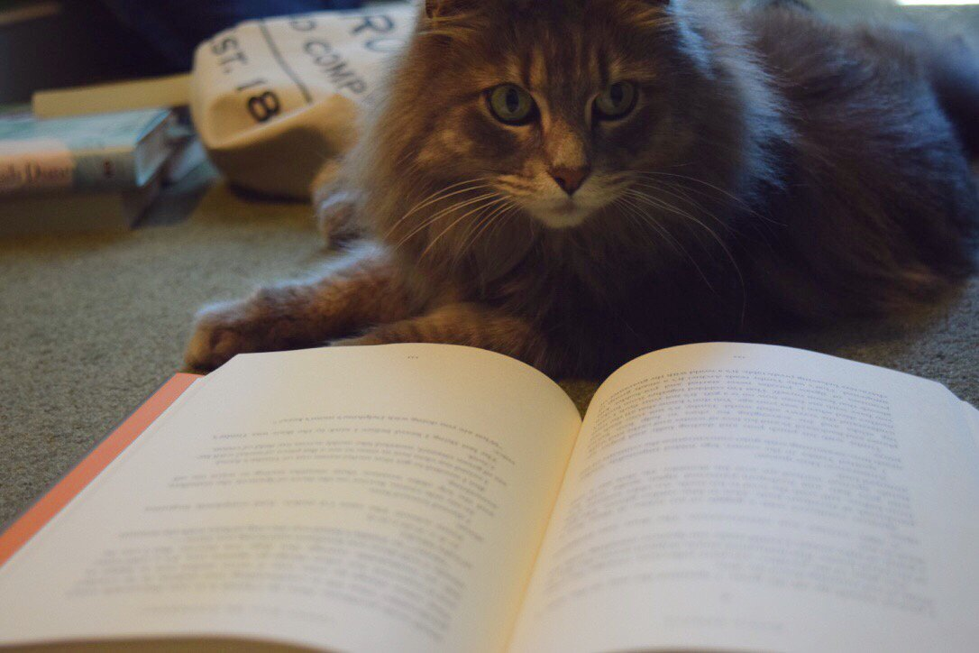 Happy #Caturday! What are you reading this weekend? https://t.co/6U8AP...