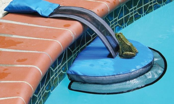 A Genius Invention Saves Thousands of Animals From Drowning in Backyard Pools:  https://www. goodnewsnetwork.org/genius-inventi on-saving-dozens-animals-drowning/ &nbsp; …  @AmyRoseKathryn #pets #safetyfirst <br>http://pic.twitter.com/k1V0POXfKD