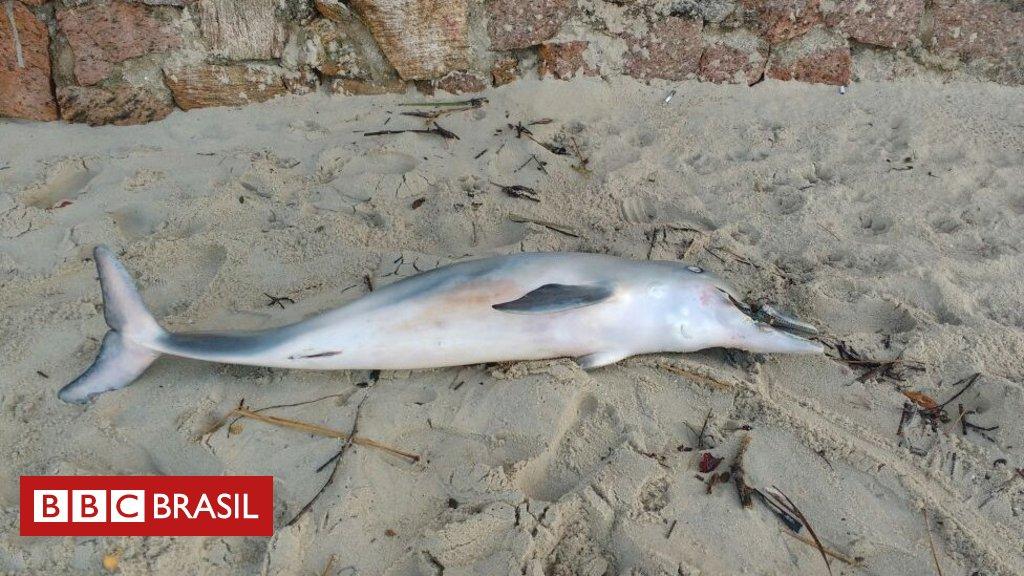 Necrópsia apontou que golfinho morreu no litoral de SP porque tira de chinelo infeccionou focinho do animal https://t.co/v3pqzJoKff