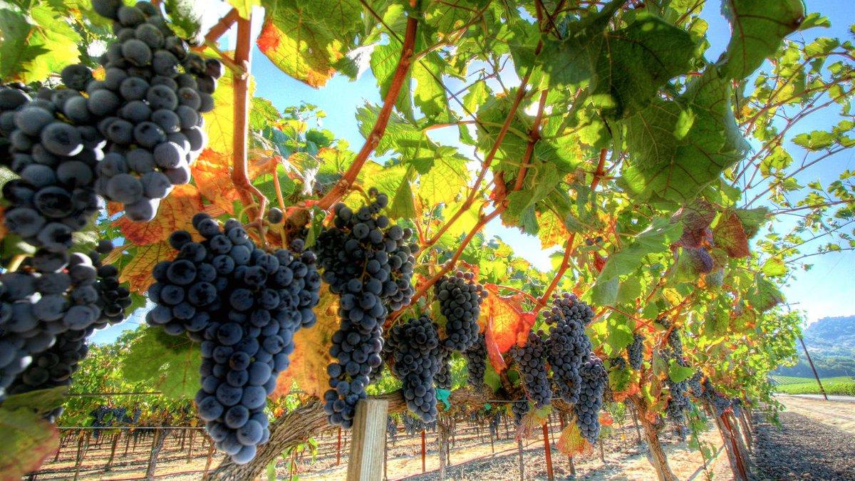 California's wine industry was built on slave labor https://t.co/Qqbzq70Hhz