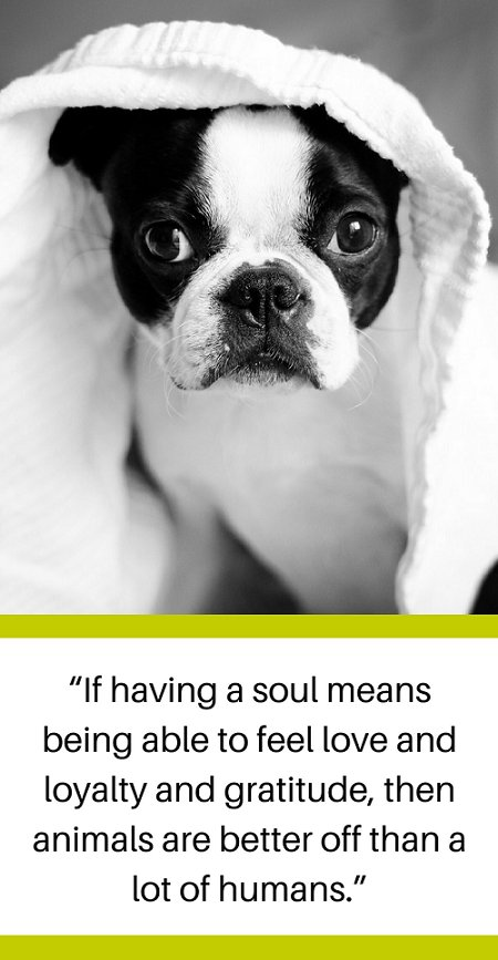 @PoshPuppy #dogs #puppy #dogquotes #dogsayings #puppylove