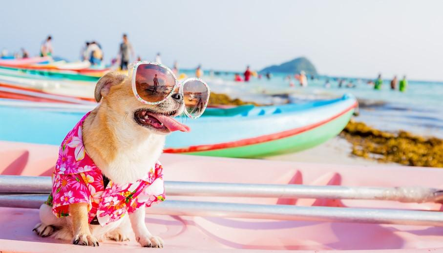 From airfare to pet care—Learn how to think through all financial details ahead of your summer vacation: https://t.co/t6tskKC8Em