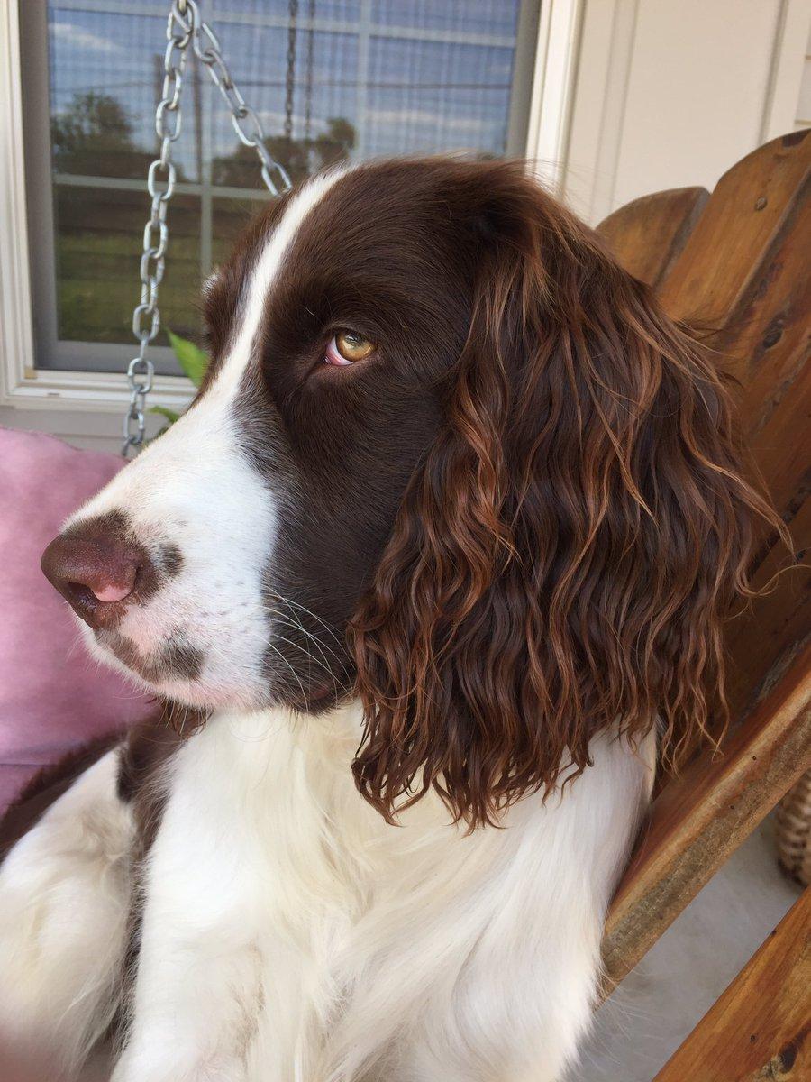 Kerbie Gibbs On Twitter My Dogs Ear Is Like The Perfect