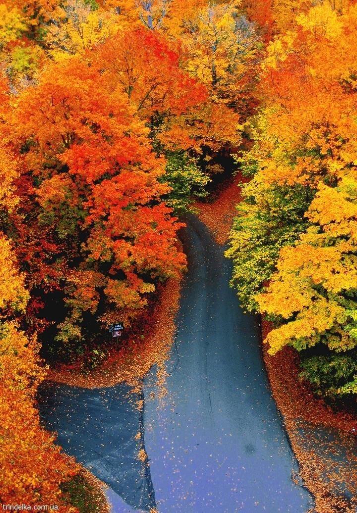 Curvy Fall Road #Woodstock #Vermont <br>http://pic.twitter.com/RhCiar2AE0
