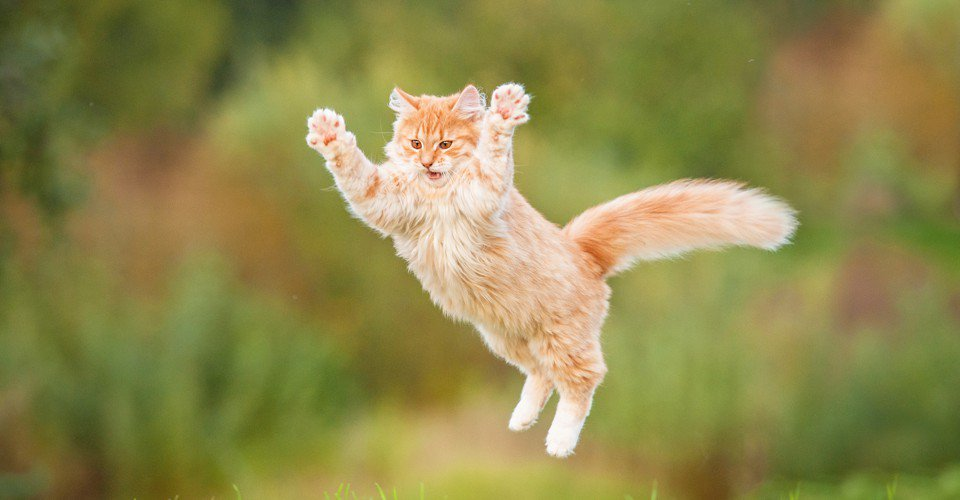 How cats used humans to conquer the world, by @sarahzhang https://t.co/wkXUsNoEDT