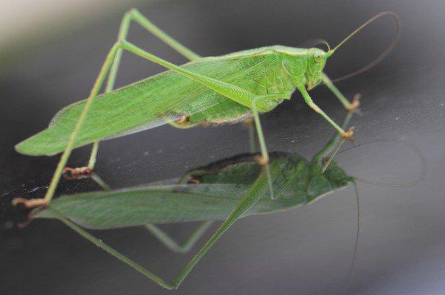 Garden serenade😊 Nighttime Music: Singing Garden Bugs - Birds and Blo...
