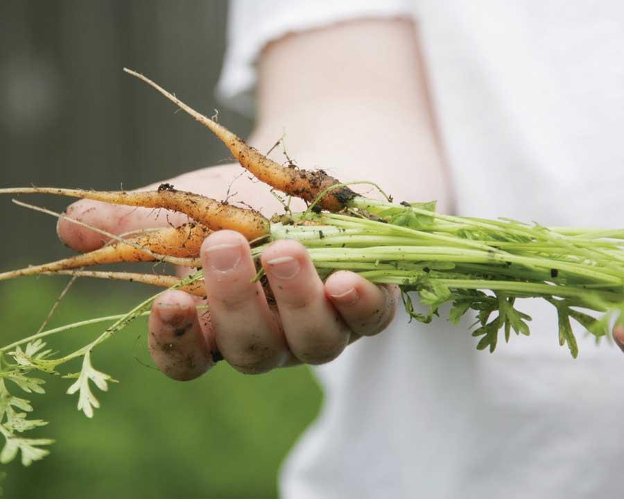 Handed-Down Harvest: Grow the Best Heirloom Varieties - https://t.co/e...