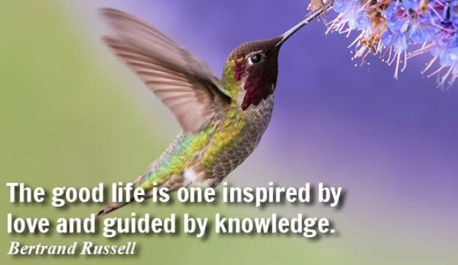 &quot;The good #life is one #inspired by #love and guided by #knowledge .&quot;~ Bertrand Russell. #SundayFunday #QOTD #ThinkBIGSundayWithMarsha<br>http://pic.twitter.com/TCeKHbMdlO