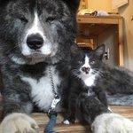 【 ご報告 】弟分ができました。( ̄∀ ̄) 3日前に突然あわられた迷い猫です。初見からこんな感じです…