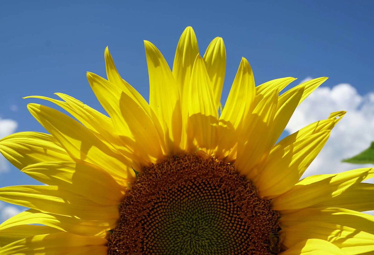 One small positive thought in the morning can change your whole day!  #Sunflowers #positivequotes<br>http://pic.twitter.com/EmepbcOP55