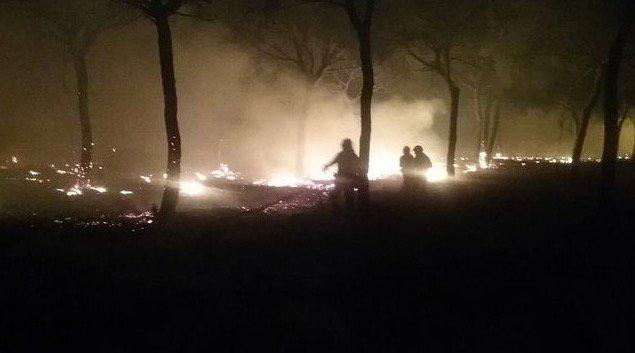 Un incendio forestal cerca de Doñana obliga a desalojar a más de 300 p...
