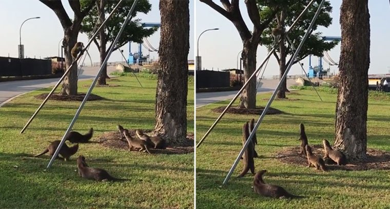 Otters & monkeys make friends with one another at Marina Barrage h...