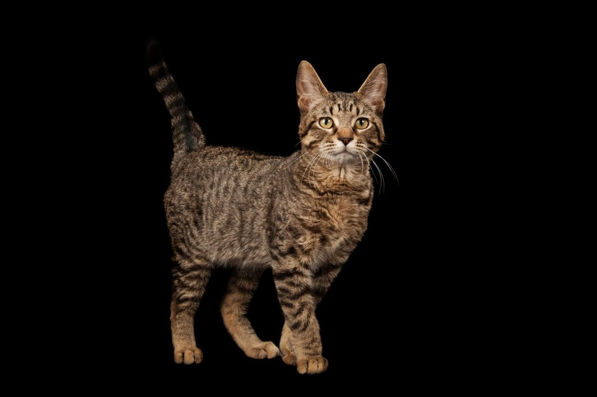 #History #Science: #cats #domesticated themselves, ancient #DNA shows ► https://t.co/hcXSLtjzh3 via @NatGeo