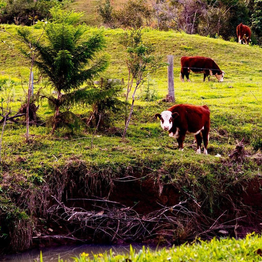What are you lookin at? Moove on. #cow #moo #farm #northernnsw #nsw #australia  http:// ift.tt/2s4wNLc  &nbsp;  <br>http://pic.twitter.com/0FOfmSKNuo
