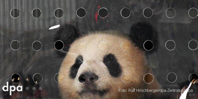 test Twitter Media - Erste Nacht in Berlin: Pandas haben gut geschlafen https://t.co/f10zd7ZoCU @zeitonline (dmo) https://t.co/sQcDACNpAH